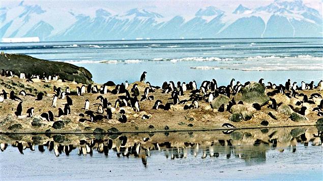 161028_nu2h9_pingouins-antarctique_sn635
