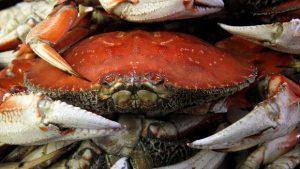 hi-bc-130701-dungeness-crab-cp-ap00275982-8col