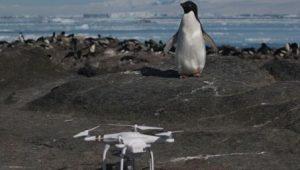 w453-88920-drone-et-manchots-ade-lie